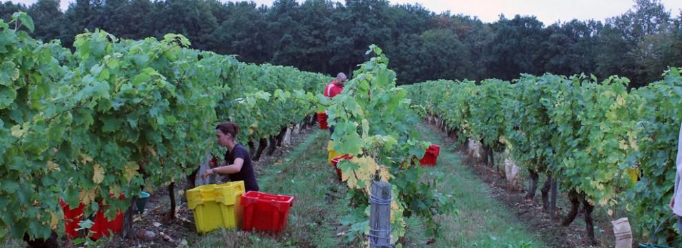 Vendanges au Domaine viticole de l